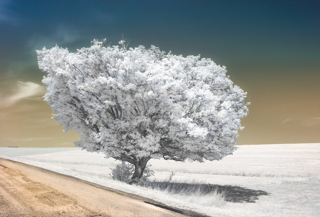 33 Beautiful Shots of Infrared Photography - Girly Design Blog