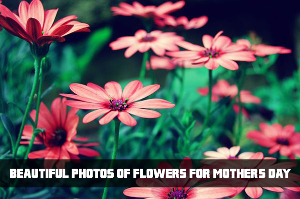 beautiful-flowers-for-mothers-day