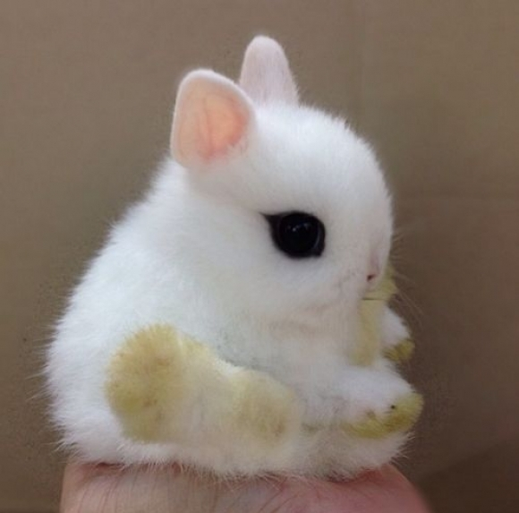 Seriously Cute Baby Animals | Girly Design Blog